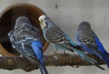 Infektionskrankheiten bei Vögeln, können je nach Verlauf tödlich enden.