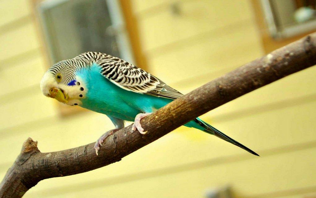Tumore sind die gefürchtetsten Erkrankungen der inneren Organe bei Vögeln.