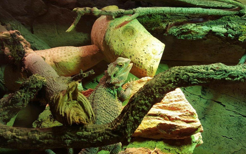Kokzidien sind Parasiten, die die inneren Organe der Terrarientiere befallen.