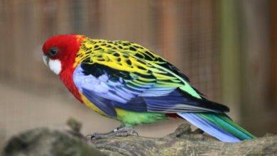 Parasiten bei Vögeln sind oft schwer mit dem Auge zu erkennen.